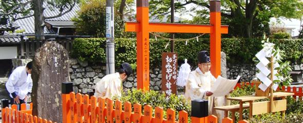 5月 日本最古の茶園 日吉茶園での茶摘祭