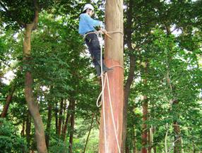 『振り縄』と呼ばれるロープを使用して体を固定しながら、上部の皮を採取します。