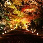 毎年11月中旬~下旬にかけてライトアップを行っています。
