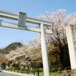 4月上旬に満開になる表参道の桜並木です。