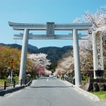桜並木の全景画像