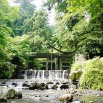 日吉大社は新緑の名所でもあります。